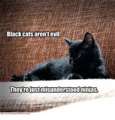 Black Cat Memes - 25 best memes about black cat black cat memes
