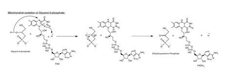 creatine glycerol phosphate the metabolic power creatine glycerol phosphate
