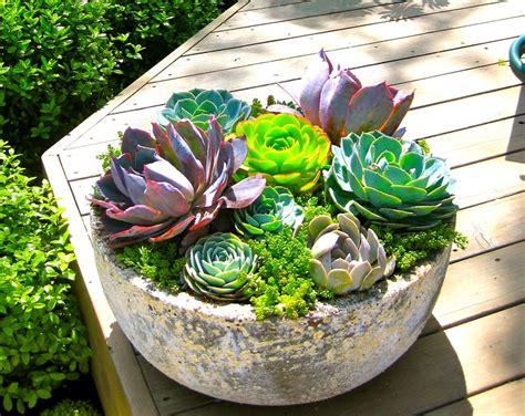 succulent planting ideas  tutorials succulent