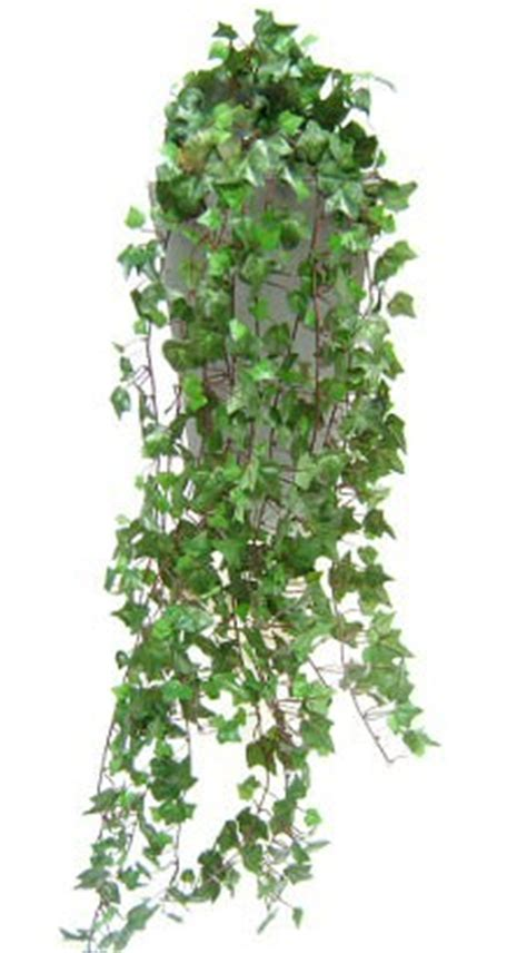 artificial english ivy  evergreen