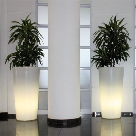 life indoors plant hire  perfect  office
