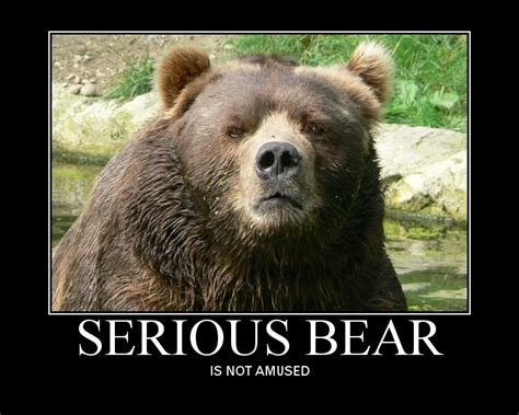 Funny Bear Memes - funny bear pictures with captions