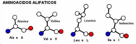 aminoacidos con cadenas alifaticas principios de estructura de prote 237 nas