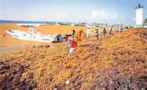 water scooter gunmen cancun so much seaweed is washing ashore no one knows what to do