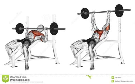 muscles used in a bench press exercising press of a bar lying on an incline be stock