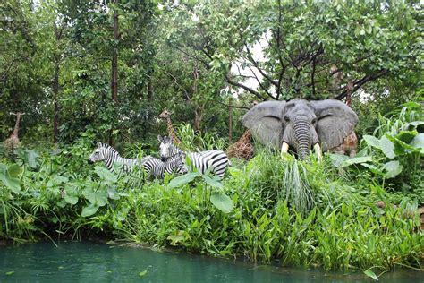 imagenes de animales y plantas de la selva selva animales cebra 183 foto gratis en pixabay