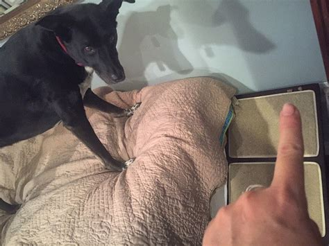 dog jumping on bed dog jumping on bed 28 images this dog jumps onto the