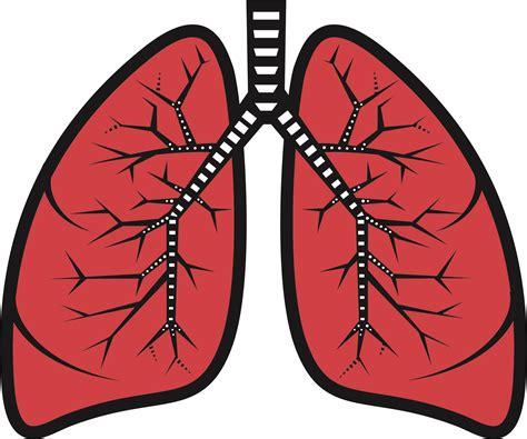 clipart lungs human lungs clipart lung clipart clipart panda free