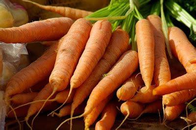 menanam budidaya wortel pertanian