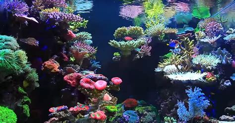reef aquarium aquascaping 17 best ideas about reef aquascaping on pinterest reef aquarium aquascaping and
