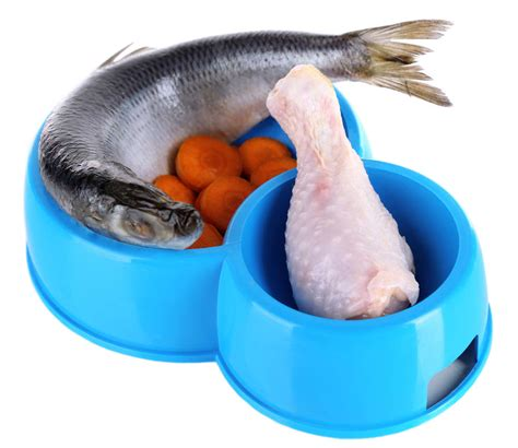 is fish for dogs 9 great ideas for food