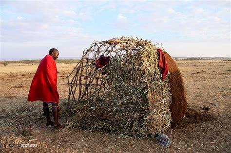 hutte masai 214 kologischer hausbau die maasai h 252 tte matira safari