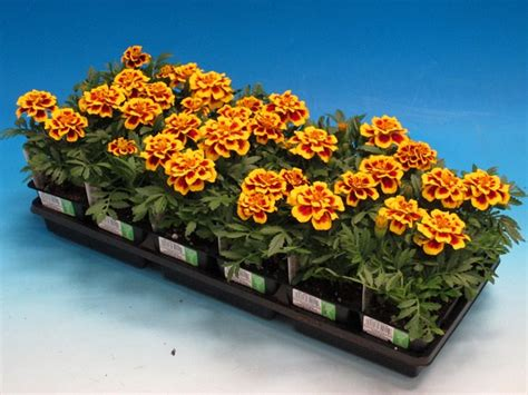 gardening under lights learn how to grow from seeds and