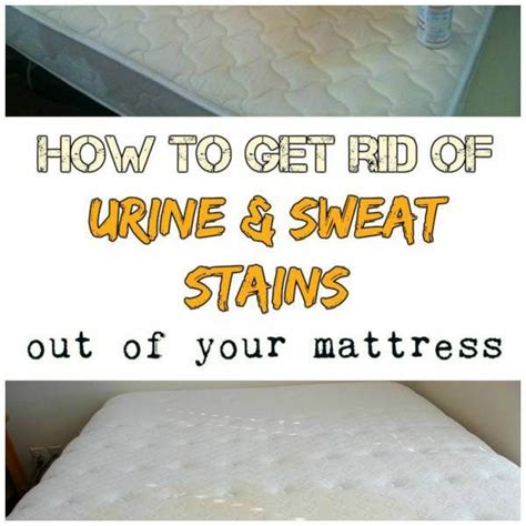 Clean Urine From Mattress by 1000 Ideas About Clean Urine From Mattress On