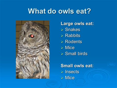 all about owls 5th grade rooms 21 and ppt video online
