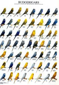 what year did the colors come out the of the budgerigar colors mutations and more