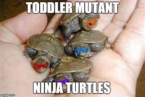 Funny Turtle Memes - funny meme comic turtle bing images