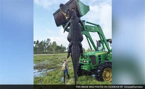 Snapped Hunters Catch And Kill 15ft 800lb Alligator It Was A Hunters Kill 800 Pound