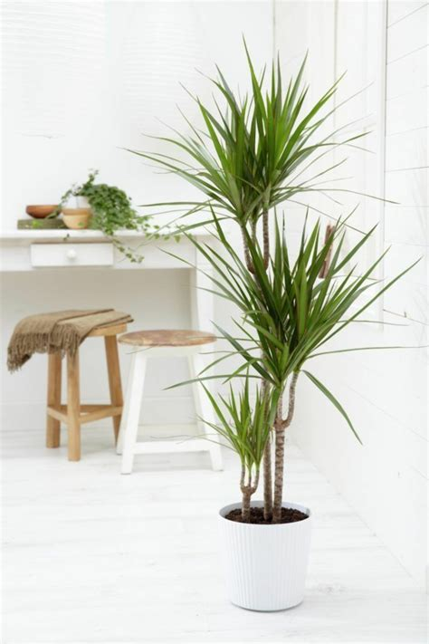 house plant types zimmerpalmen bilder welche sind die typischen palmen arten