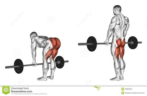 Bench Glute Raises Exercising Deadlifts With A Barbell Legs Straigh Stock