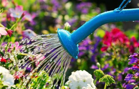 innaffiare giardino il mondo in un giardino come e quando annaffiare le piante