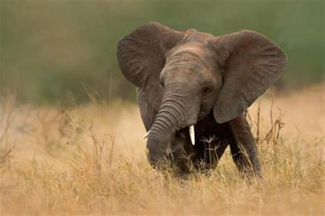 Wallpaper Tumblr Elephant