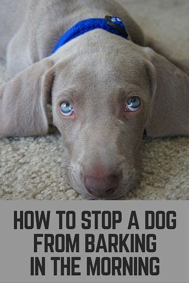 how to stop your puppy from barking stop a dog from barking in the morning thatmutt com