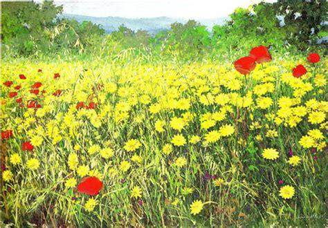 peppino fiori eliotropo ciuri di cu tributo a peppino impastato