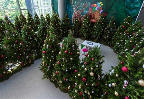 gallery of christmas trees canberra christmas tree on