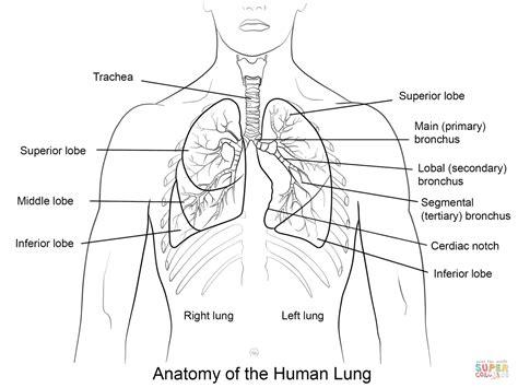 Primary Explorers Human the respiratory system lesson 0393 tqa explorer