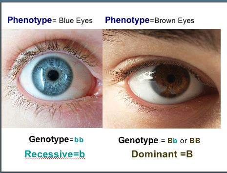 What Does Each Color Mean by Splitting Up Asthma Genotypes Phenotypes And Endotypes