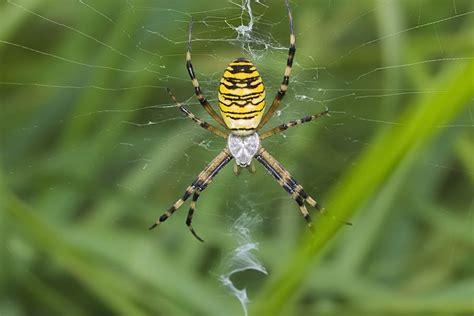 schönste häuser deutschlands kleine gelbe spinnen kleine gelbe spinne bild foto