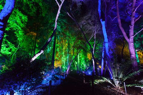 forest city lights enchanted forest of light brings l a s most stunning