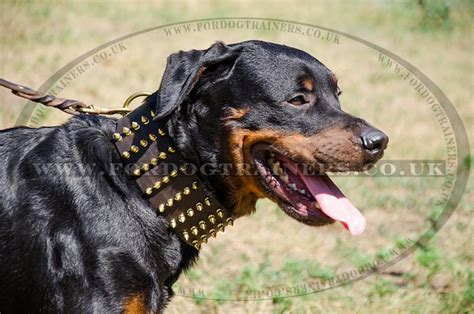 rottweiler collar designer collars 3 in wide rottweiler collars uk