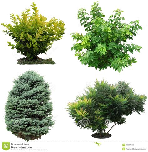 trees bushes izolated stock photo image of nature