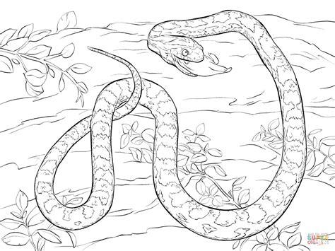 coloriage serpent des bl 233 s mangeant une souris