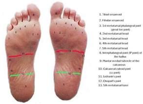 anatomy of the plantar foot myfootshop