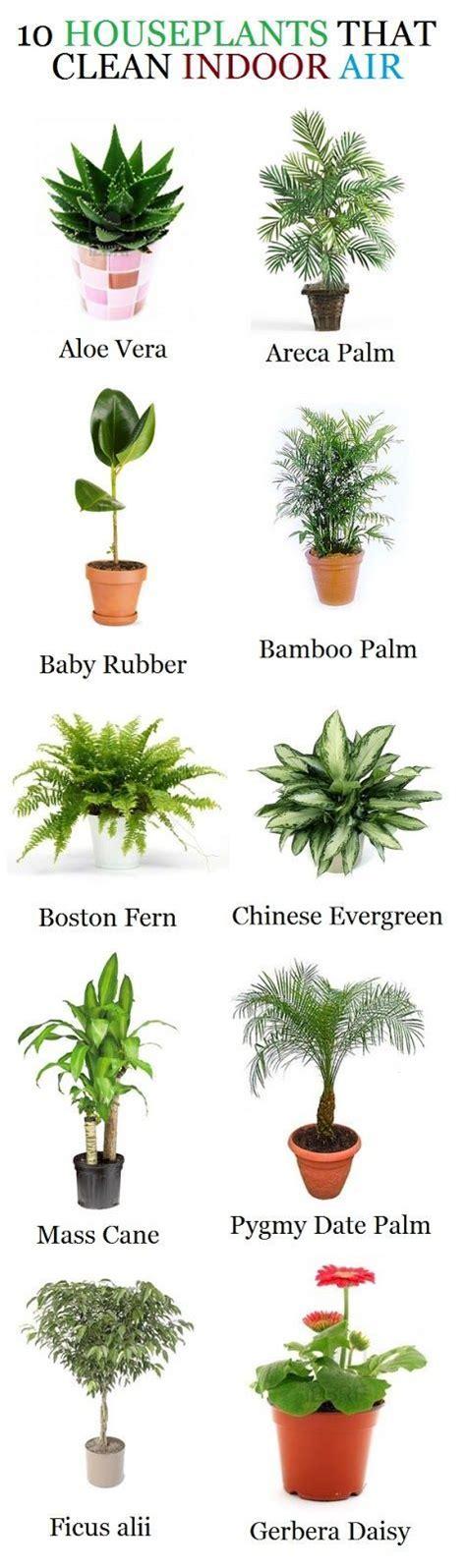 good houseplants alternative gardning 10 houseplants that clean indoor air