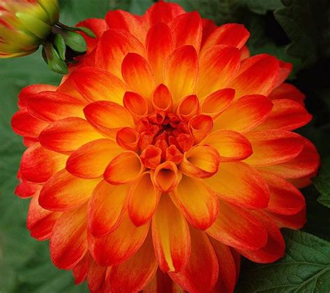 sun l for plants 17 best images about container gardening sun on
