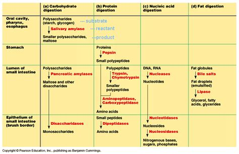digestive enzymes and their functions table science