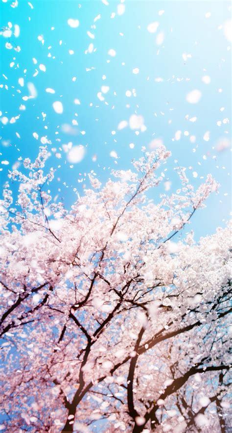 wallpaper spring pinterest spring wallpaper wallpapers pinterest spring