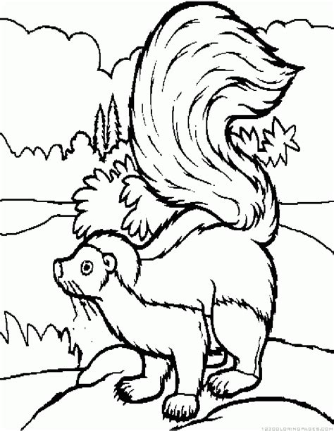 coloring page skunk blackhairstylecuts com