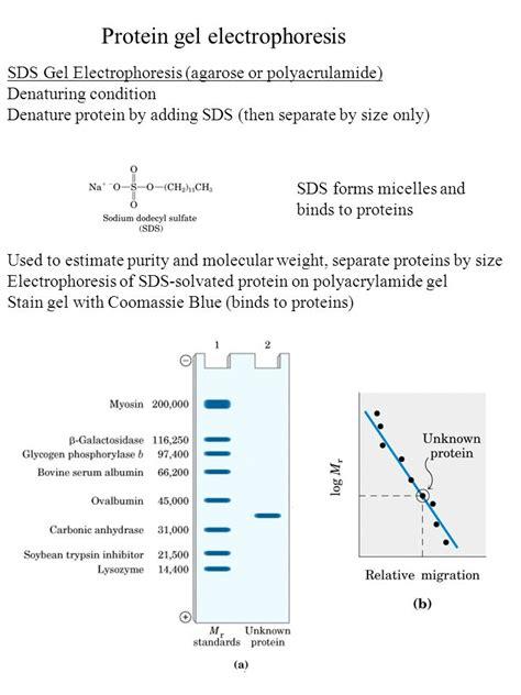 s protein agarose protein gel electrophoresis ppt