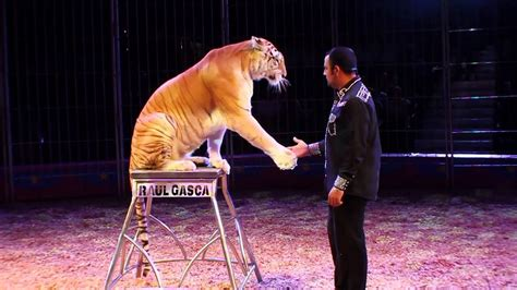 Kaos The Accused human and animal exploitation circuses accused of