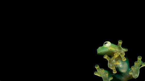 vijay hd background picture image 1920x1080 1366x768 and other frog wallpapers animal literature