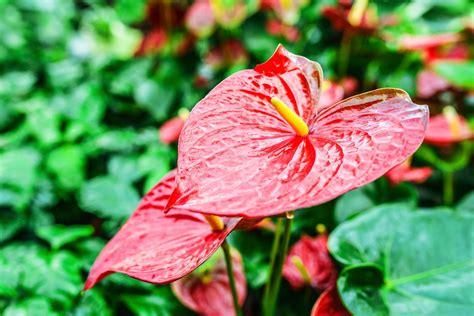 Hawaiian Flowers by Hawaiian Flower Care And Care