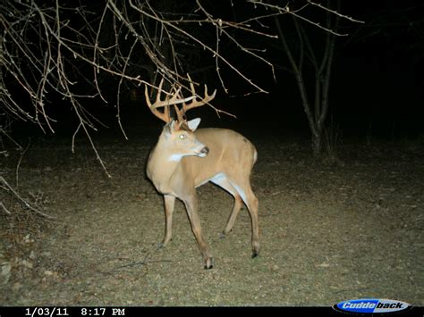live deer wildlife cams deer camera deer cam game