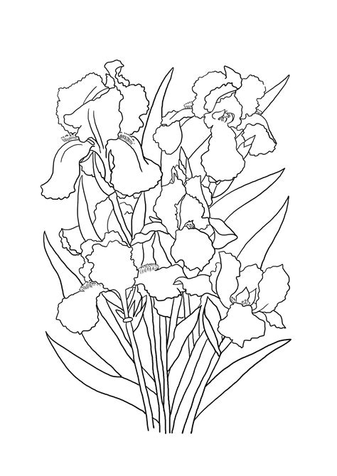 coloring pictures of iris flowers flower coloring pages