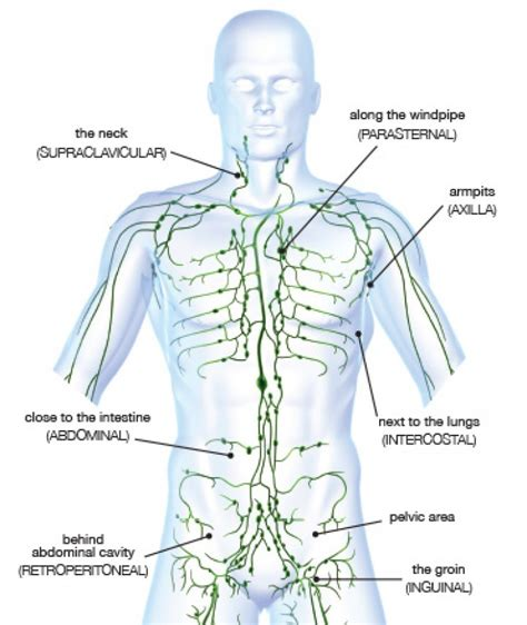 lymphatic drainage system diagram natura physical therapy