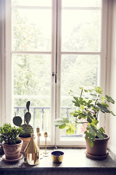 Window Sill Plants Decor Best 25 Window Sill Ideas On Pinterest Window Ledge Oak Window Sill And Window Sill Trim